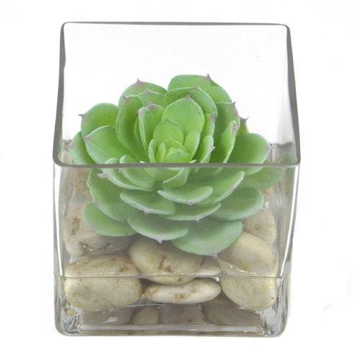 Green Faux Echeveria in Glass Cube