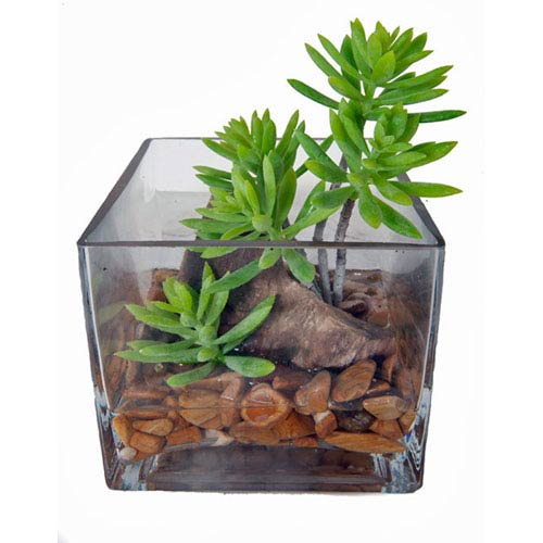 Creative Branch Accents Faux Succulents in Acrylic Water