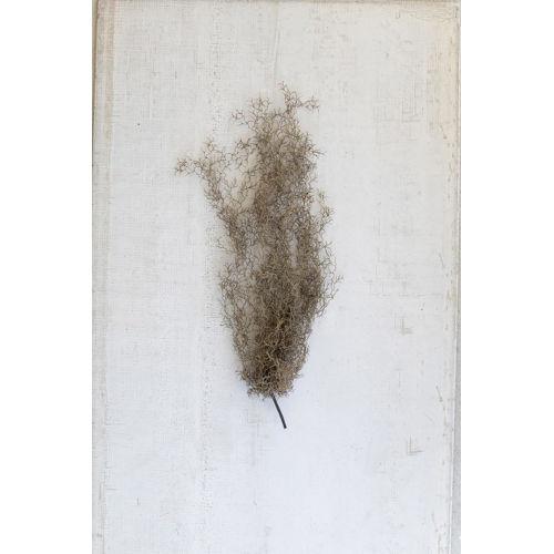 Gray Artificial Moss, Set of Six