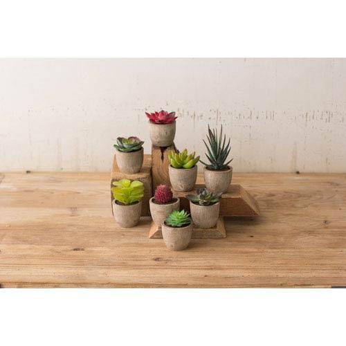 Miniature Succulents, Set of 8