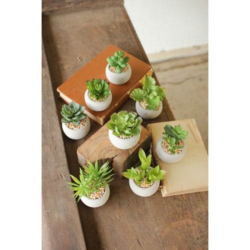 Small Succulents with Round Grey Pot, Set of Eight