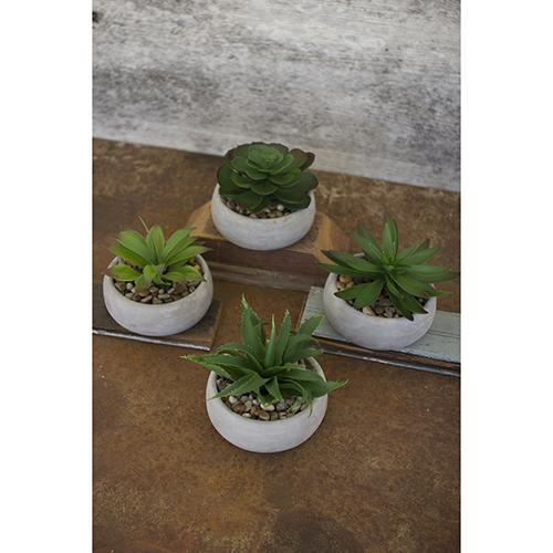 Set of Four Artificial Succulents In Low Round Cement Pots