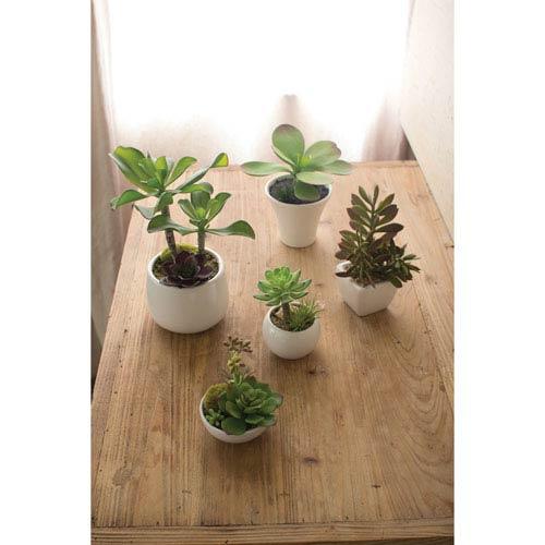 Artificial Succulents with White Ceramic Pots, Set of Five