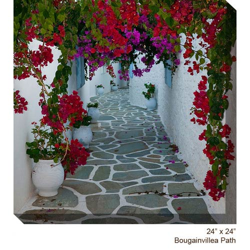 West Of The Wind Designs Bougainvillea Path: 24 x 24 All Weather Outdoor Photograph Canvas Giclee