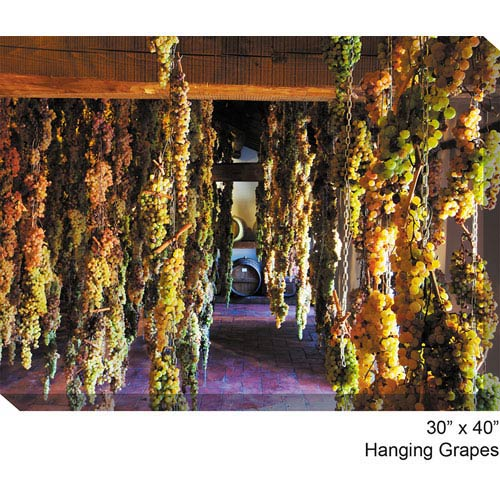 West Of The Wind Designs Hanging Grapes: 40 x 30 All Weather Outdoor Photograph Canvas Giclee