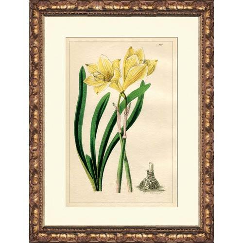 Amaryllis: 14 x 16 Framed Giclee Canvas