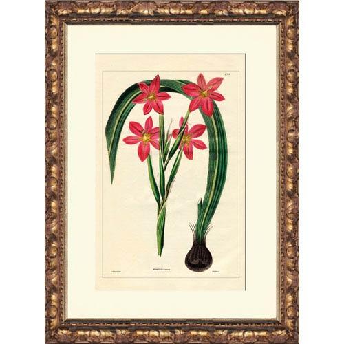 Homberia: 14 x 16 Framed Giclee Canvas
