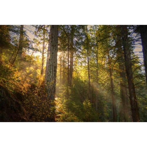 Hadley House Burney, California Forest by Kelly Wade, 9 x 12 In. Canvas Art
