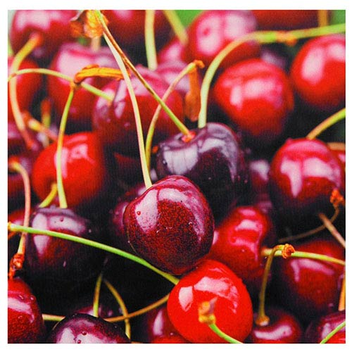 Oriental Furniture Cherries: 19.75 x 19.75 Canvas Wall Art