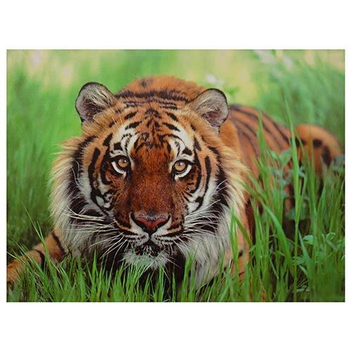 Oriental Furniture Crouching Tiger: 31.5 x 23.5 Canvas Wall Art