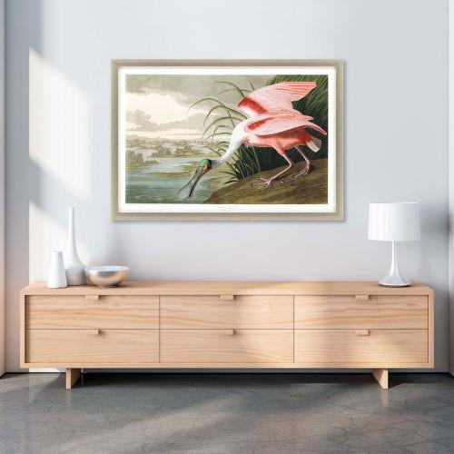 Roseate Spoonbill Multicolor Framed Art