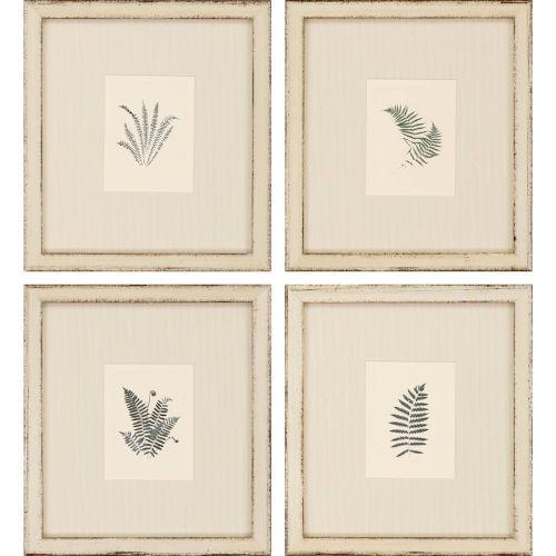 Natural Ferns Green Framed Wall Art, Set of 4