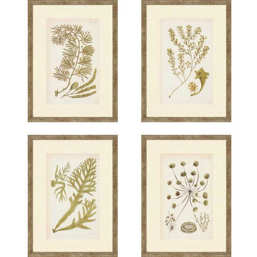 Paragon Sea I by Ziffer: 18 x 13-Inch Framed Wall Art, Set of Four
