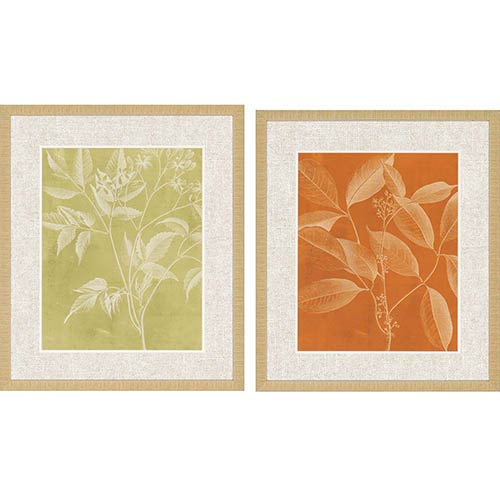Paragon Modern Botany II: 28 x 24 Framed Giclee Printed, Set of 2