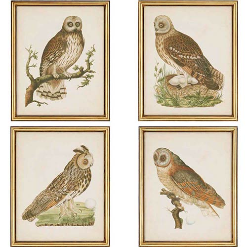 Paragon Nozeman Owls by Nozeman: 22 x 18 Framed Giclee Printed, Set of 4
