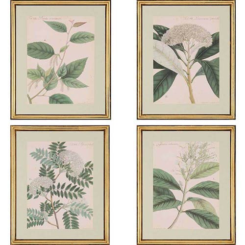 Paragon Botanicals by Wallich: 22 x 18 Framed Acrylic Paint, Set of 4