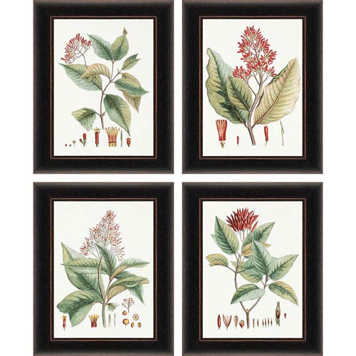 Crimson Botanical by Hierseman: 20 x 16 Framed Print, Set of Four