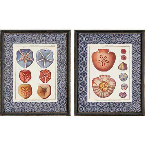 Paragon Sand Dollars by Diderot: 22 x 18 Framed Acrylic Paint, Set of 2