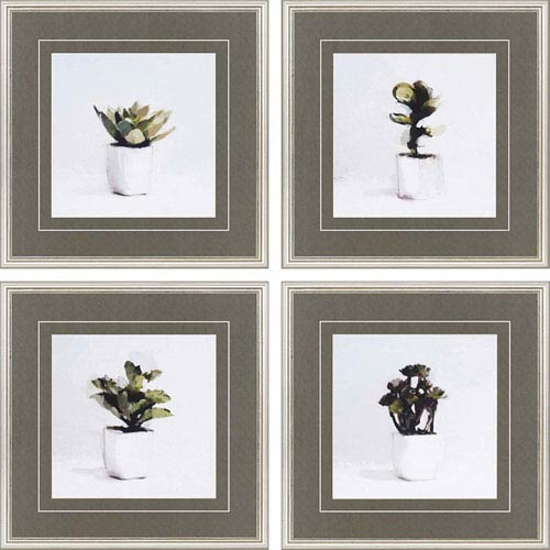 Succulents by Sayilir: 20 x 20 Framed Giclee Printed, Set of 4