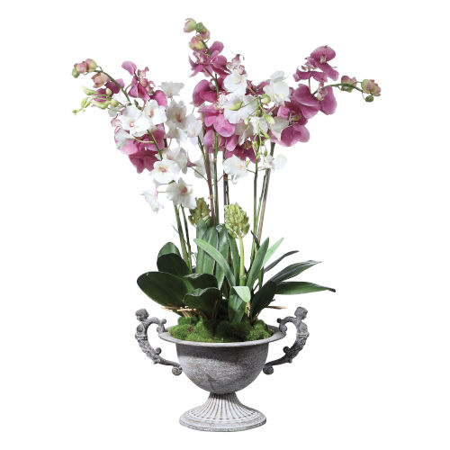 Nydia Mauve Pink and Cream Potted Orchid
