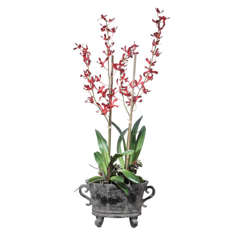 Reza Magenta Potted Lush Orchid
