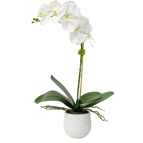 Cami Orchid White and Green 14-Inch Orchid