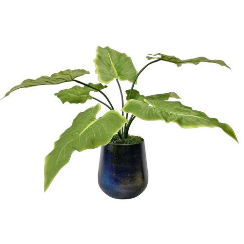 Mari Calla Blue and Green 24-Inch Accent Plant