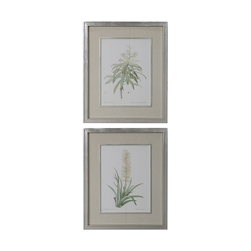 Uttermost Plant Study Print, Set of Two