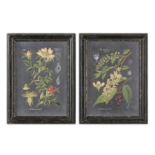 Uttermost Midnight Botanicals by Grace Feyock: 24.5 x 32.5-Inch Print Reproduction, Set of 2