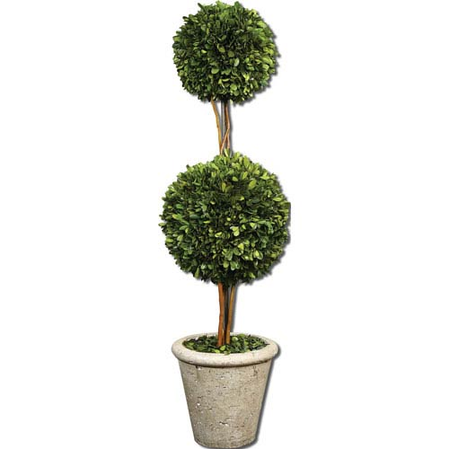Preserved Boxwood, Two Sphere Topiary Botanical