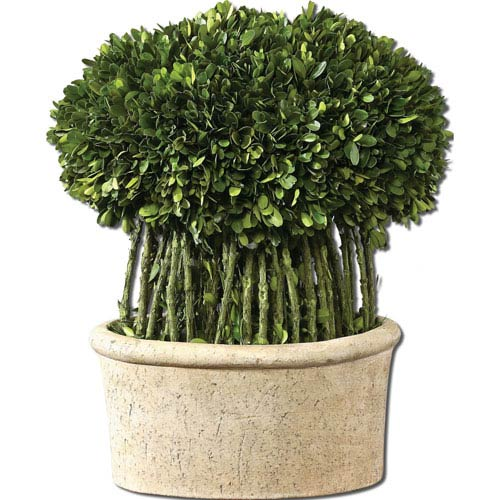 Preserved Boxwood, Willow Topiary Botanical