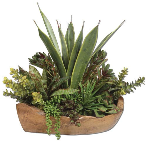Green Salar Succulents with Teak Bowl