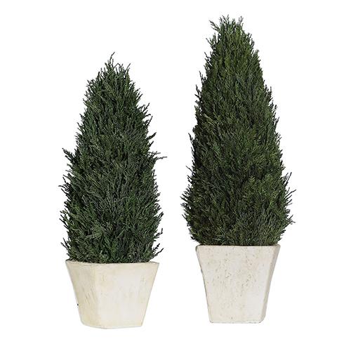 Cypress Cone Topiaries, Set of 2