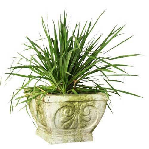 Verde Fleur de Lis Square Outdoor Pot