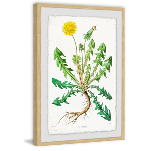 Marmont Hill Yellow Dandelion 30 x 20 In. Framed Painting Print