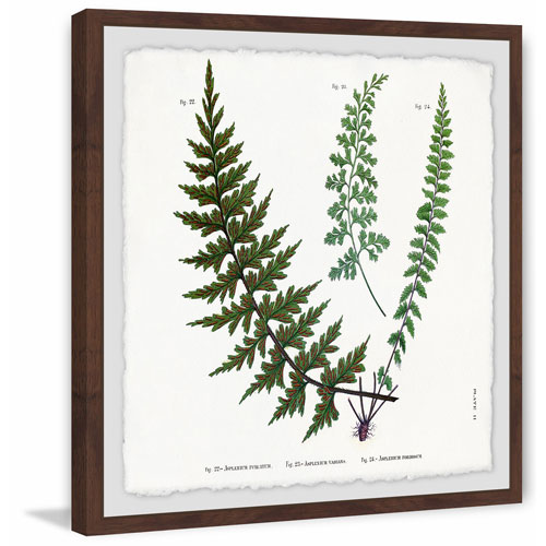 Marmont Hill Indian Ferns 40 x 40 In. Framed Painting Print