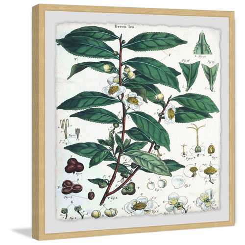 Marmont Hill Green Tea 24 x 24 In. Framed Painting Print