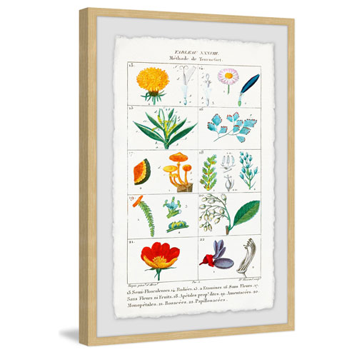 Marmont Hill Botany French 2 12 x 8 In. Framed Painting Print