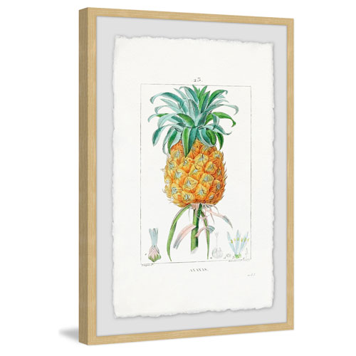 Marmont Hill Botanical Pineapple 30 x 20 In. Framed Painting Print