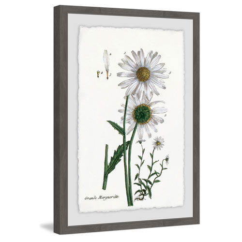 Marmont Hill White Daisy III 18 x 12 In. Framed Painting Print
