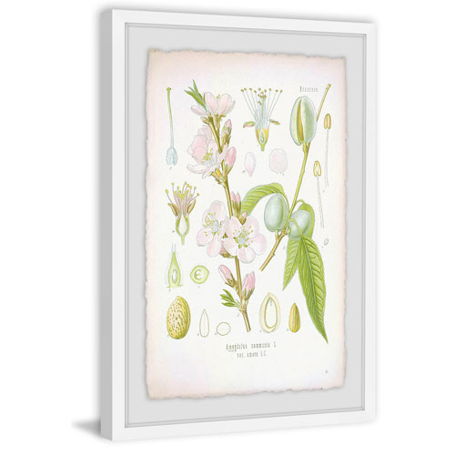 Marmont Hill Plant Genus 60 x 40 In. Framed Painting Print