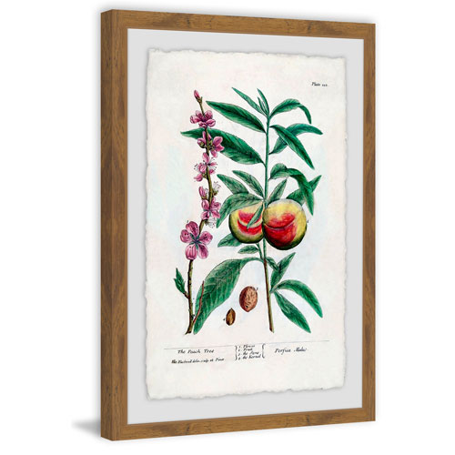 Marmont Hill Fruit Persica 24 x 16 In. Framed Painting Print