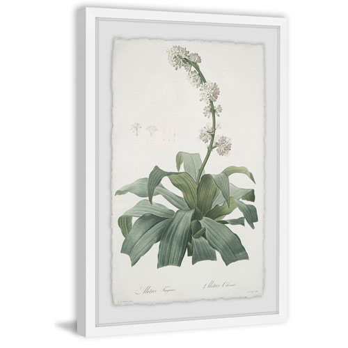 Marmont Hill Aletris Fragrans 30 x 20 In. Framed Painting Print