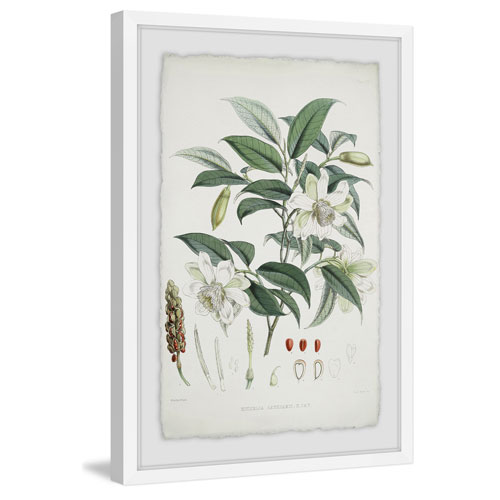 Marmont Hill As Sweet as Magnolia 45 x 30 In. Framed Painting Print