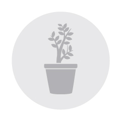 Planters deals